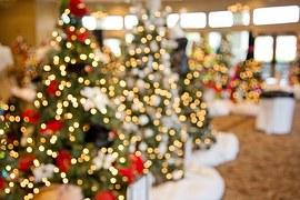 christmas-trees-1042542__180