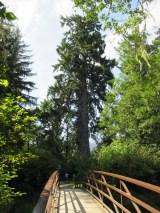 bridge to the spruce