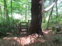 gate into woods