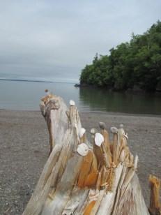 driftwood/shell art