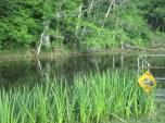 the bayou - gator crossing