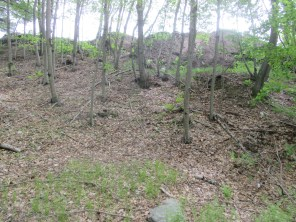 compost mounds