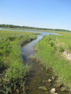 stream towards pond