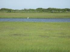 that egret's still hunting