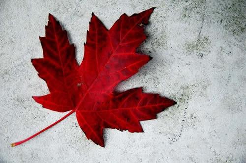 Canada Day in Oakville