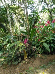 BelizeGVP6