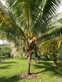 BelizeGVP13