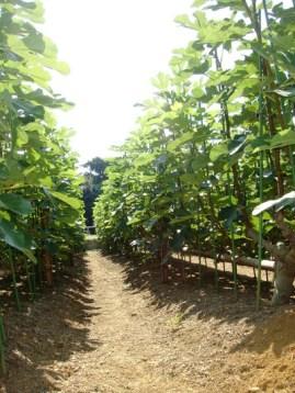 写真提供:加藤農園