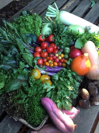 有機栽培野菜を仕入れています