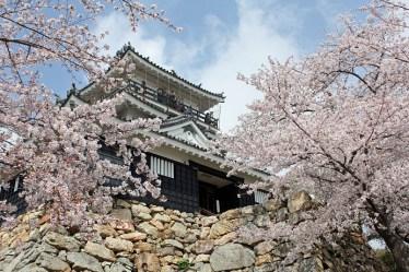 春の浜松城 ©浜松情報BOOK