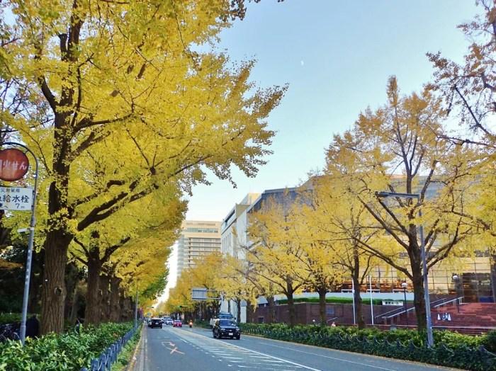 山下公園通りの紅葉