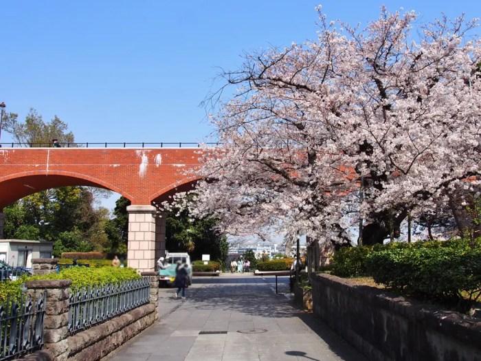 港の見える丘公園「芸亭の桜」