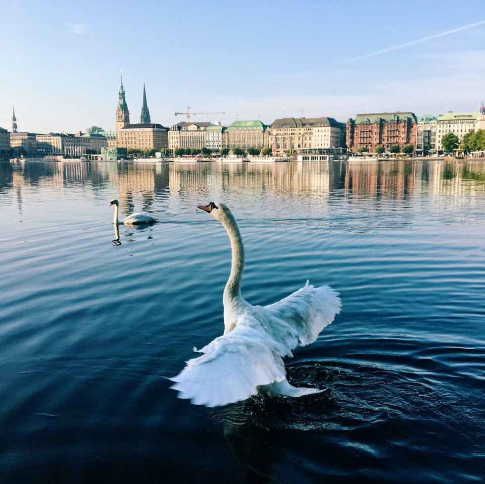 11 Things Hardly Anyone Knows About Hamburg's Alster Swans