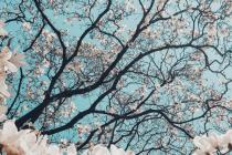 Teaser-Frühling