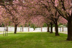 Altonaer Volkspark Mai 2013 (Friedhof)