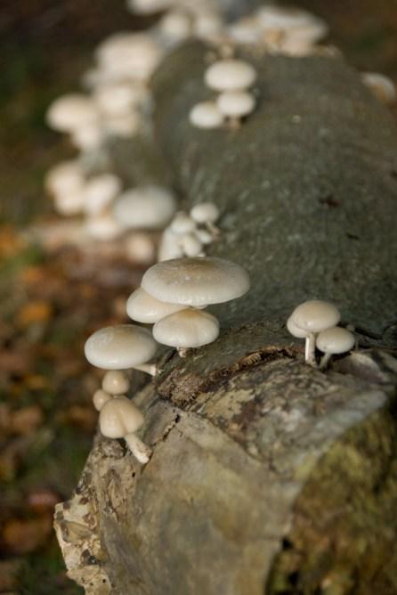 Pilze im Darßwald, Oktober 2013