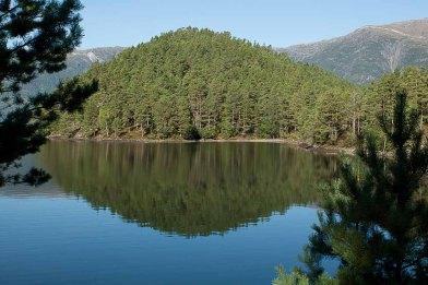 Bäume in Norwegen