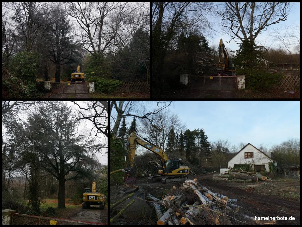 Baumfällarbeiten auf dem Gelände der ehem. Gärtnerei Rosenbusch