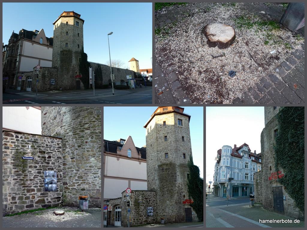 Kastanienfällungen am Kastanienwall haben begonnen – Hier Haspelmatturm: