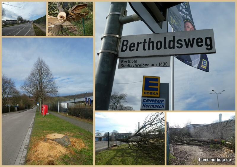 """Zusammenfassung """"Baumsituation"""" in Hameln und weitere Bilder vom Bertholdsweg"""