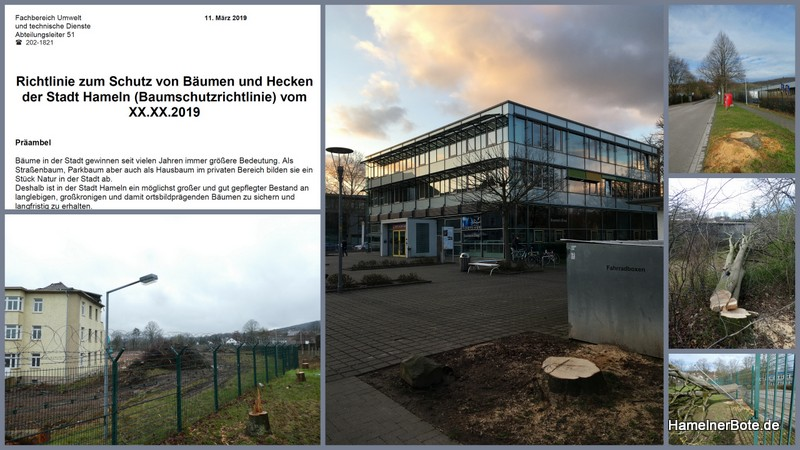 Die Baumschutzrichtlinie der Stadt Hameln
