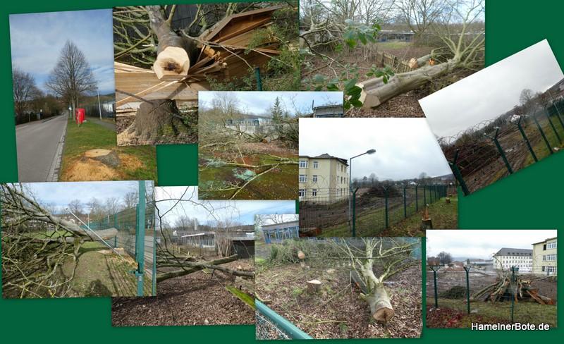 Keine Berichterstattung über die Baumfällungen Linsingenkaserne und Bertholdsweg