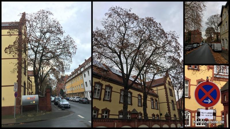 4 Baumfällungen an der Scharnhorststraße geplant.