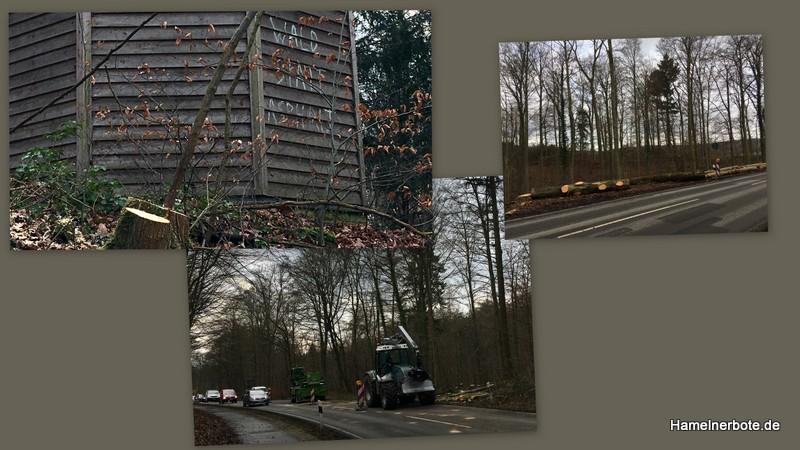 Baumfällungen Holtenser Landstraße haben begonnen.