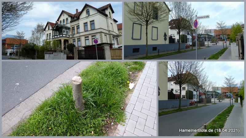 Hameln, Gröninger Straße – Baumschwund: