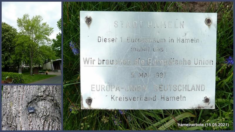Hamelns 1. Europabaum. Weitere sollten folgen: