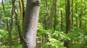 From this thick, lush, vibrant living forest, a habitat to many...