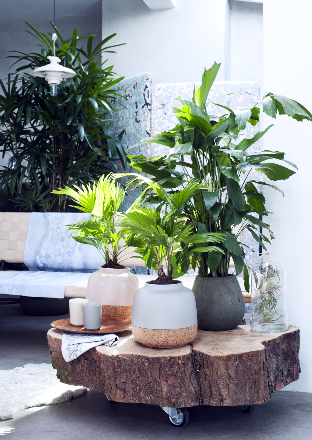 Specialty Palms: houseplants of the month for February
