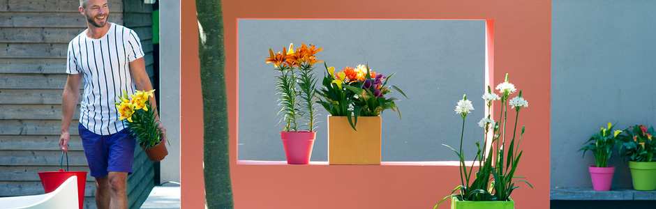 Hamiplant & Garden Plant of the Month for July: Potted summer bulbs: Calla Lily ...