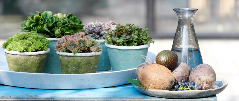 Green Covering: Houseplants of the Month for October