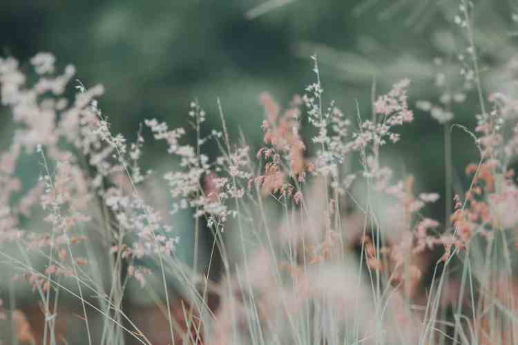flora-flowers-grass-268261