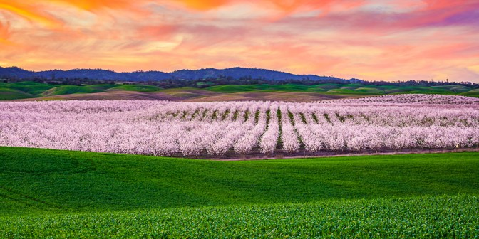 Blossoming Sunset by Greg Mitchell.