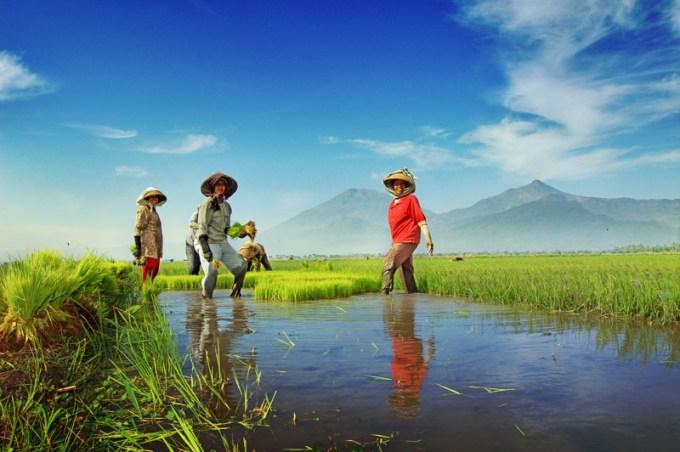 penerapan prinsip, pertanian organik