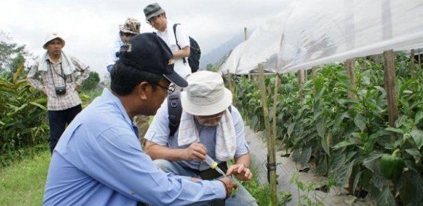 penelitian, pertanian organik