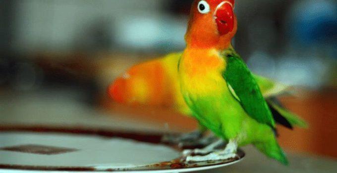 vitamin lovebird super