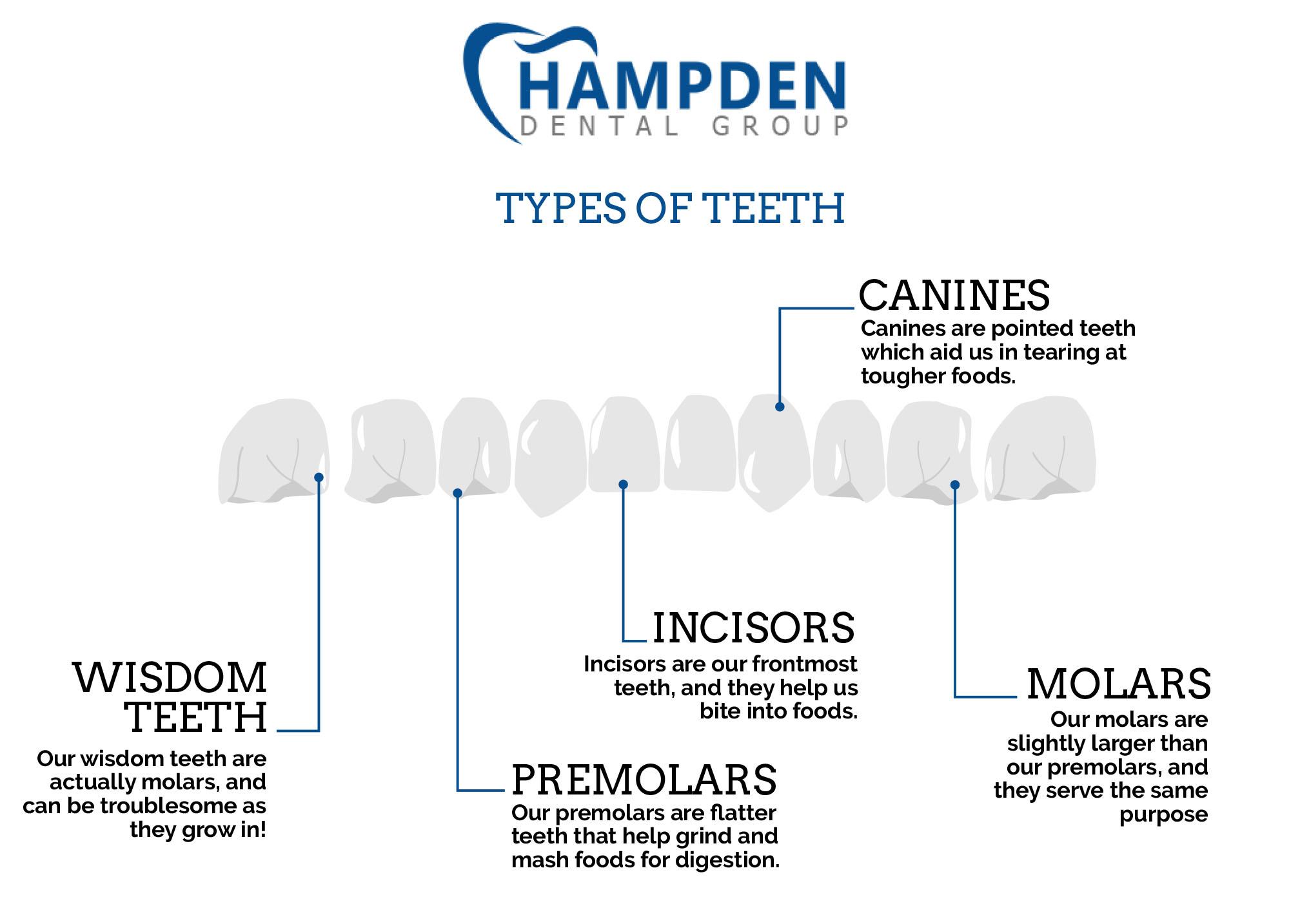 Aurora Dentist The Four Types Of Teeth