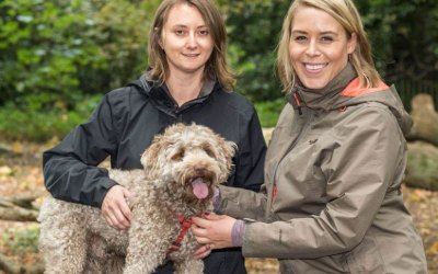 Corona Virus Update – Business as Usual at Hampstead Housesitters and Hampstead Hounds