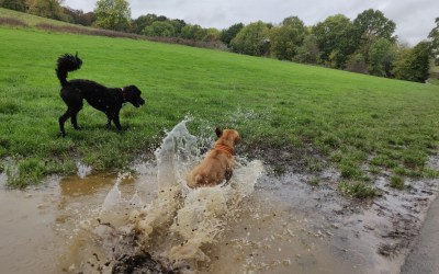 Enjoy the Autumn with your dog and embrace the mud and weather!