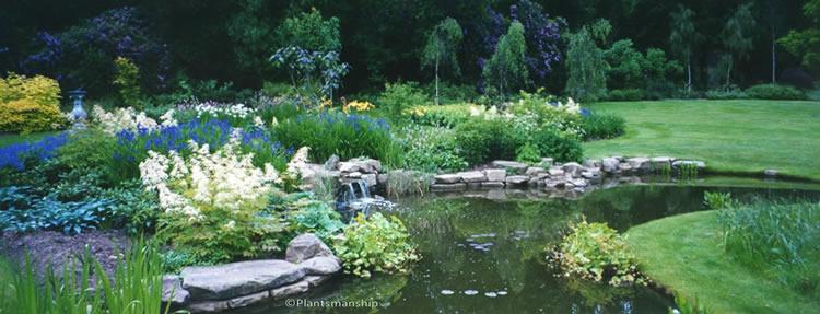 landscape gardeners Hampton - Plantsmanship