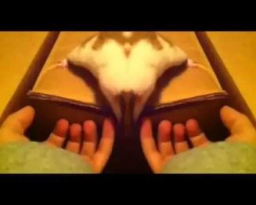 Funny hamster - 1506675544 funny hamster
