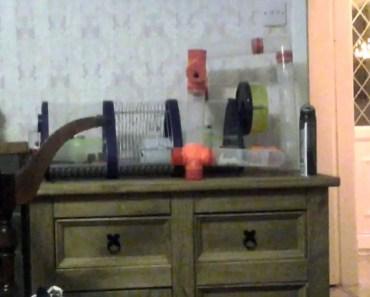 Funny hamster - 1506677195 funny hamster