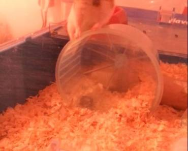 Funny hamster - 1506809233 funny hamster