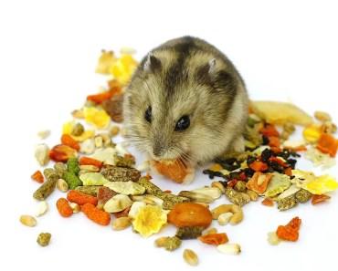 Kết quả hình ảnh cho What do hamsters eat?
