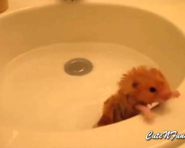 Cute and Funny Hamster Videos Compilation 2015 Part 1 - cute and funny hamster videos compilation 2015 part 1