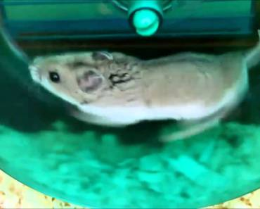 Cute HAMSTERS Funny Mix - cute hamsters funny