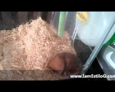 E.G. Young scares the crap out of a Hamster (Funny) - e g young scares the crap out of a hamster funny